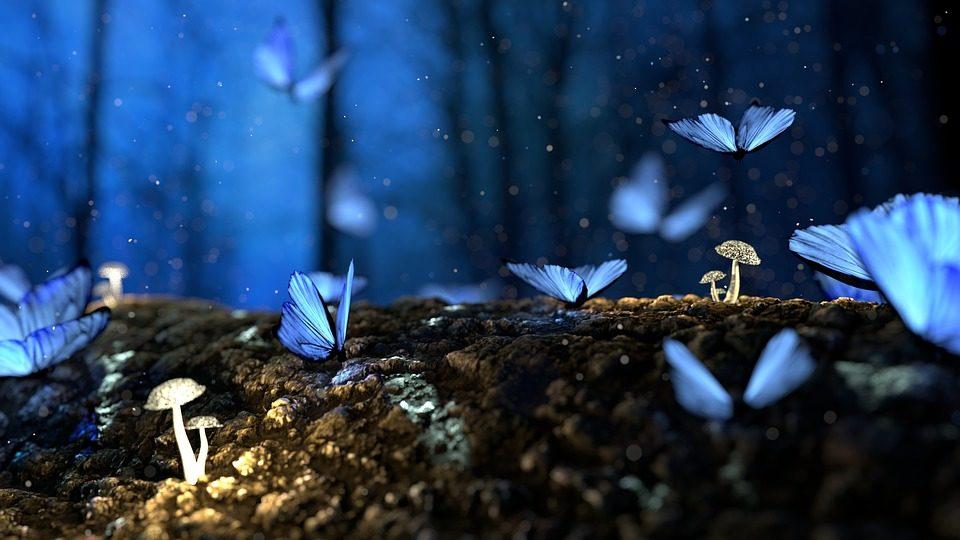 Blaue Schmetterlinge und Pilze im Wald, Traum